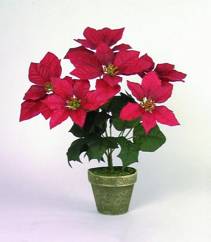 DECO 33cm Poinsettia 6 flowers red potte, discoland.fi