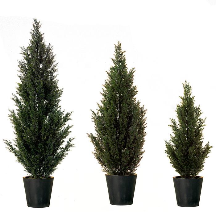 EUROPALMS 140cm Sypressi, aidon oloinen, muovia. Perinteinen ainavihanta havupuu, joka saattaa kasvaa jopa 40 metriä korkeaksi. Sypressejä kasvaa laajalti pohjoisella pallonpuoliskolla lämpimässä ilmastossa. Monia lajeja kasvatetaan puistoissa koristepuina ja Aasiassa myös temppelien ympärillä.