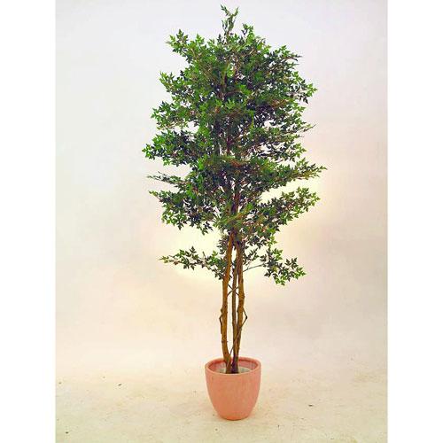 EUROPALMS 210cm Ming-Areliax tree , discoland.fi