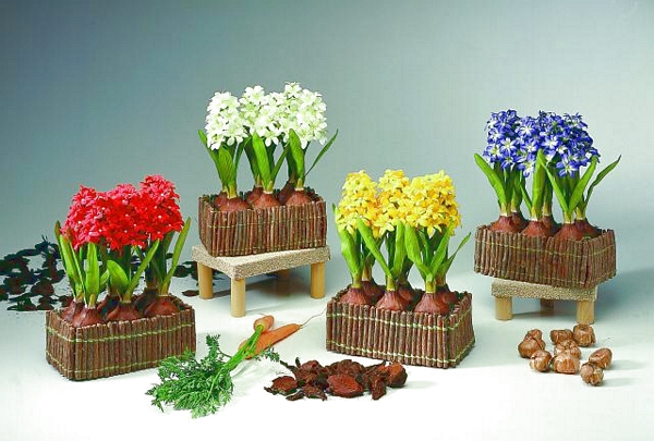 EUROPALMS Hyacinth 6 flowers, in a wooden box , blue