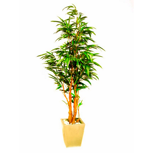 EUROPALMS 210cm Pitkälehtiviikuna, käsin tehdyt lehdet ja aito runko, koko viikunasarjan kaikki koot erittäin edullisia! Ficus longifolia. Ideal for a classy decoration. Ficus tree series at an unbeatable price
