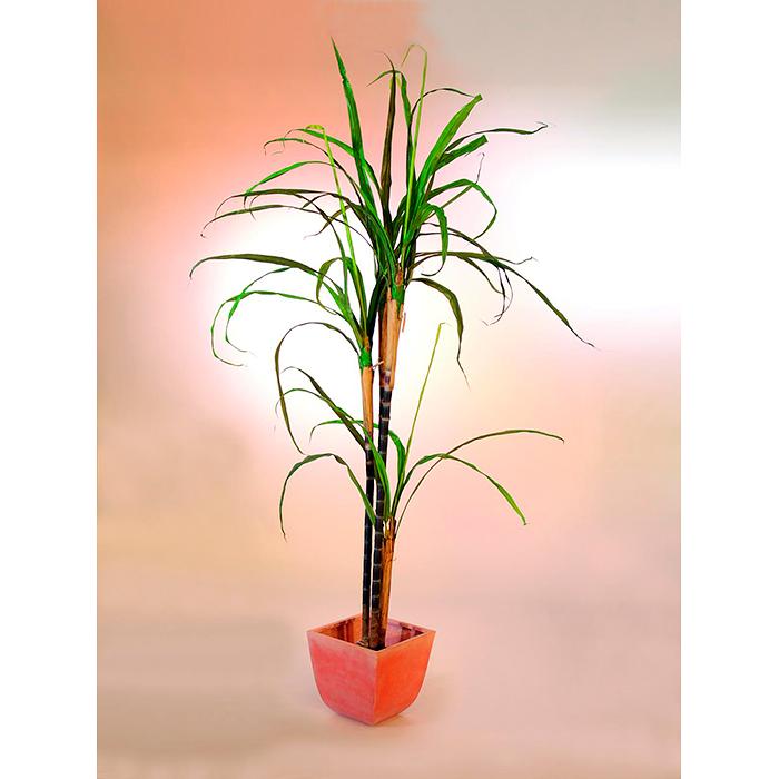 EUROPALMS 288cm Sokeriruoko, 4 ruokoa, 39 lehteä. Sugar cane. Realisticly appearing sugar cane for superior decorations