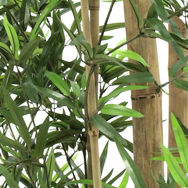 EUROPALMS 150cm Bambu aidoilla ruo'oilla, valettu deco-ruukkuun, aidot bambut on heinäkasvien ryhmä, johon kuuluu noin 90 sukua ja näihin yhteensä yli tuhat lajia, yksittäinen bambu versoo suoraan maasta vuosittain useita versoja, ja niiden halkaisija riippuu emokasvin iästä, pituutta tulee päivittäin lisää. Bambuja kasvaa villinä laajalla alueella ja viljeltynä lähes kaikkialla. Laajimmat bambumetsät ovat Aasian vuoristoissa, joissa bambuja kasvaa jopa 4 000 metrin korkeudessa. Bambun varsi on erittäin kuitupitoinen, ja sitä käytetään rakennusmateriaalina, polttopuuna, työkalujen ja tarveastioiden valmistukseen sekä tekstiilien raaka-aineena. Nuoria versoja syödään keitettyinä. Isopandat ja kultapandat käyttävät bambuja pääravintonaan