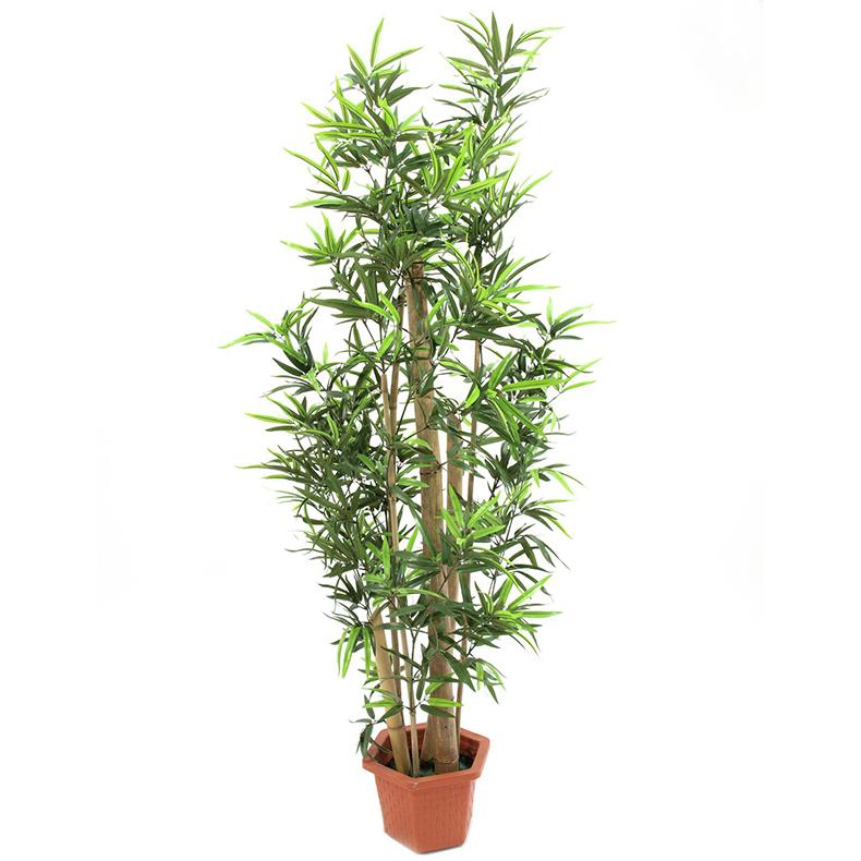 EUROPALMS 150cm Bambu aidoilla ruo'oilla, discoland.fi