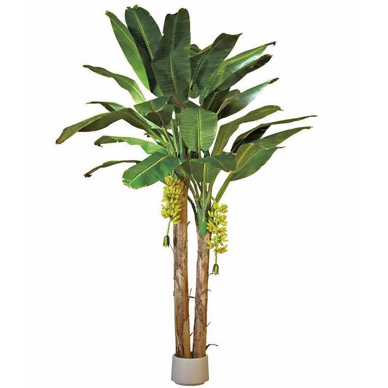EUROPALMS 440cm Banaanipuu banaanitertui, discoland.fi