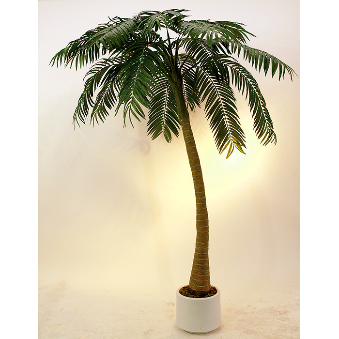 EUROPALMS 300cm Palmu kaarevalla rungolla ja decoruukulla, laadukas tekstiili lehvästö, aidot palmukasvit ovat yksisirkkaisten kasvien heimo, joka kuuluu ainoana ryhmänä palmumaisten kasvien lahkoon Arecales, valtaosa palmuista kasvaa tropiikissa ja loput subtropiikissa, pohjoisimman lajin, kääpiöpalmun levinneisyys ulottuu Etelä-Ranskaan ja 44° leveyspiirille. Palmusukuja tunnetaan 189–205 ja lajeja noin 2500. Heimoon kuuluu sekä puita että pensaita ja jokunen köynnöskasvikin. Lehdet ovat ikivihreitä, ja niiden koko vaihtelee pienestä hyvin suureen. Palmukasveilla on suuri taloudellinen merkitys, sillä niistä tuotetaan esimerkiksi öljyjä, kookostuotteita ja taateleita.