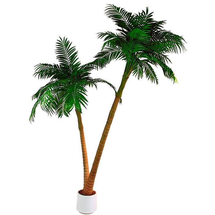 EUROPALMS 305cm Palmu tuplarungolla ja d, discoland.fi