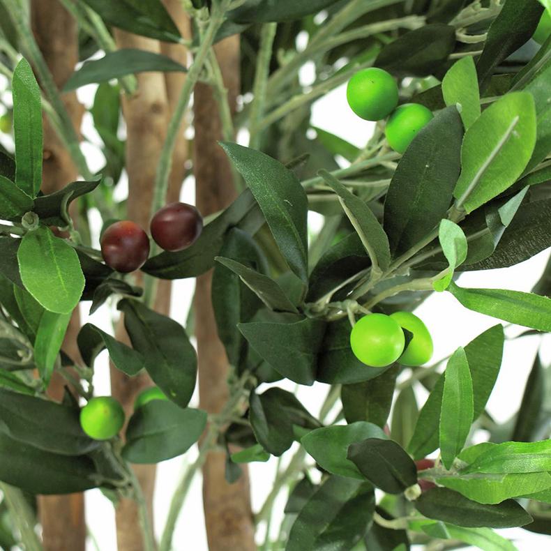 EUROPALMS 165cm Oliivipuu (öljypuu) kaksi runkoinen oliiveilla, Välimeren tunnelmaa. Oliivi on hyvin vanha viljelyskasvi. Kreetalla sitä tiedetään viljellyn jo noin vuonna 3000 eaa. Sitä milloin oliiveja on ensimmäisen kerran viljelty, niin ei tiedetä. Hedelmä, oliivi eli öljymarja, on pieni, 1–2,5 cm pitkä öljypitoinen luumarja. Oliivit joko poimitaan raakoina, vihreinä, tai niiden annetaan kypsyä, jolloin ne saavat tummansinisen värin ja saadaan ns mustia oliiveja.