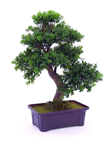 DECO 61cm Bonsai 538 leaves, with pot