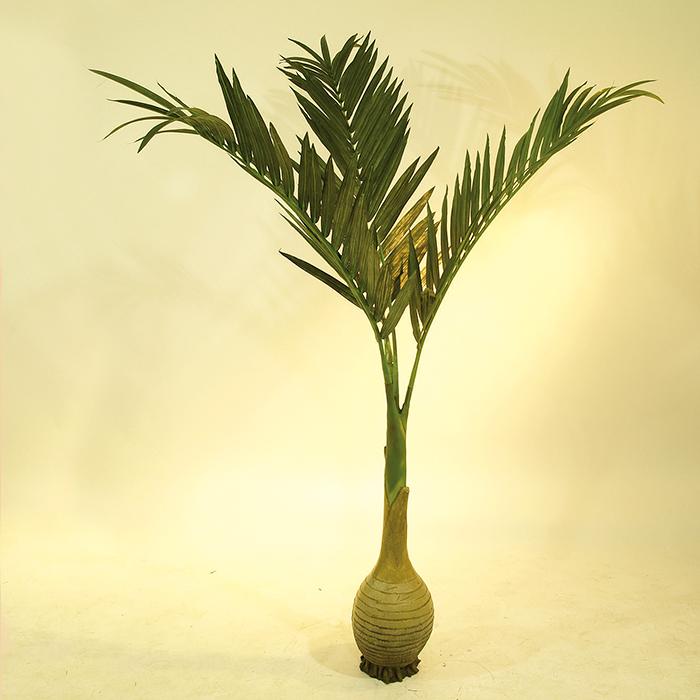 EUROPALMS 240cm Kanariantaatelipalmu pullorungolla, 4 lehvää. Palmujen suvun sisältä löytyy monia toisiaan muistuttavia palmuja, joiden käyttötapa vaihtelee, toisista lajikkeista saadaan ihmiselle kelpaavaa ravintoa ja toisia käytetään esim. huonekasveiksi. Jotku palmut saattavat kasvaa 25 metrin korkuiseksi puuksi.