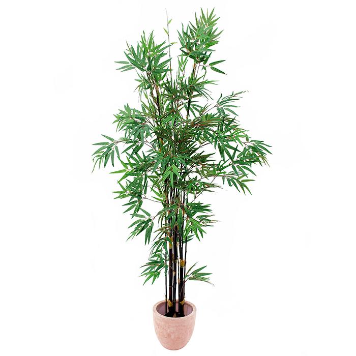 EUROPALMS 210cm Bambupuu mustilla tekoru, discoland.fi