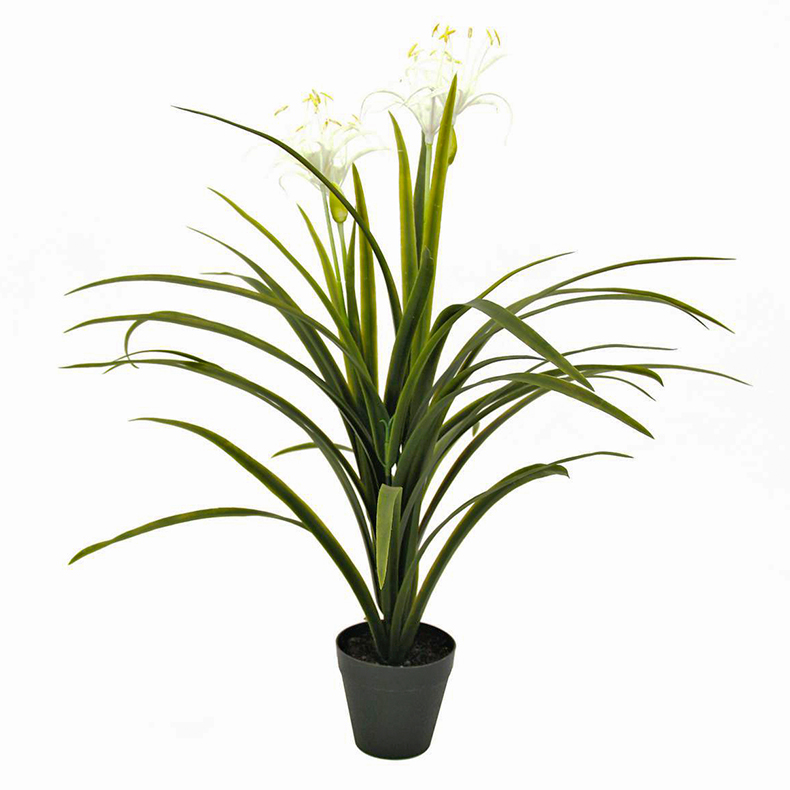EUROPALMS 71cm Jukkapalmu kukilla Yucca palm with flowers. Natural appearing yucca palm for superior decorations