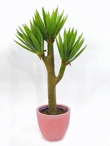 EUROPALMS 105cm Yucca Palm bush, Jukkapa, discoland.fi