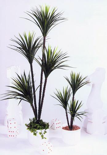 EUROPALMS 180cm x 4 Yucca Palm, Jukkapalmu 4 runkolla UUSI malli