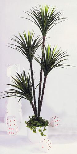 EUROPALMS 180cm x 4 Yucca Palm, Jukkapal, discoland.fi