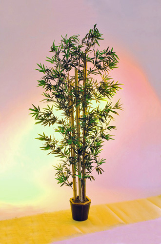 EUROPALMS 205cm Bamboo tree with natural, discoland.fi