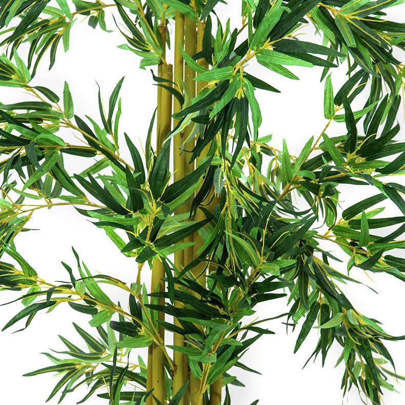 EUROPALMS 300cm Bambupuu usealla rungolla. Aidot bambut kuuluvat heinäkasvien ryhmään, joita on 90 sukua ja näihin kuuluu yhteensä yli tuhat lajia. Yksittäinen bambukasvi versoo suoraan maasta vuosittain useita versoja. Niiden halkaisija riippuu emokasvin iästä, pituutta tulee päivittäin lisää.