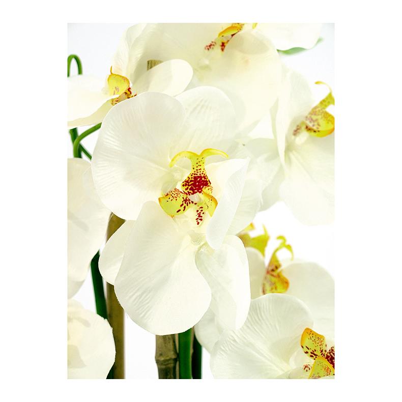 EUROPALMS 80cm Orkidea väri valkoinen ruukusssa, tyylikästä ajattomaan dekoraatioon.