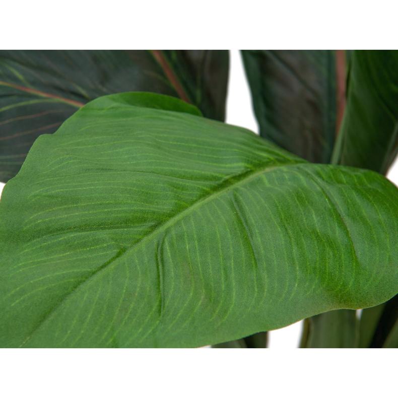 EUROPALMS 45cm Palmun taimi