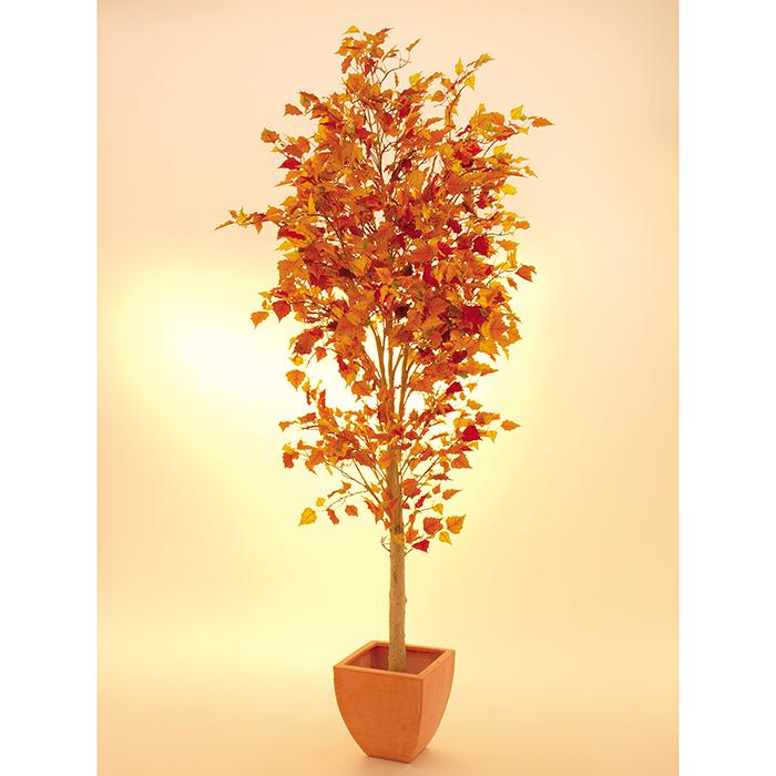 EUROPALMS 180cm Syyskoivu tuo lämpimät värit dekoraatioon.