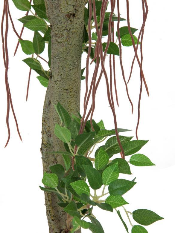 EUROPALMS 100cm Limoviikuna pallopuu, luonnolisen oloinen keinotekoisella rungolla. Limoviikuna on viikunoiden sukuun kuuluva laji, joka kasvaa luonnonvaraisena Etelä- ja Kaakkois-Aasiassa sekä Pohjois-Australiassa. Limoviikuna on myös suosittu koristekasvi, josta on jalostettu runsaasti erilaisia lajikkeita. Limoviikunaa on kasvatettu huonekasvina jo lähes parisataa vuotta. Se on lähtöisin Intiasta. Limoviikuna muistuttaa hieman kotoista koivuamme tuuheine ja siroine lehtineen. Limoviikuna voi kasvaa luonnonvaraisena jopa 30 metriä korkeaksi puuksi. Lehdet ovat 6–13 cm pitkiä, soikeita ja pitkäkärkisiä sekä kiiltäviä. Lajikkeet eroavat toisistaan lehtien koon, värin sekä värityksen kirjavuuden suhteen. Koko viikunasarjan kaikki koot ovat erittäin edullisia.