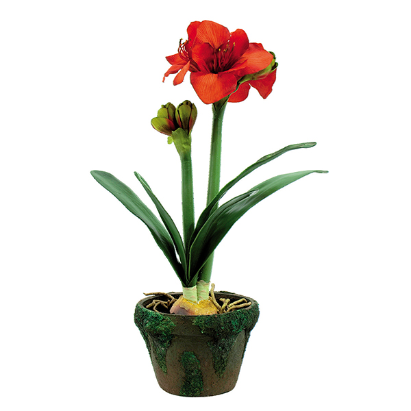 EUROPALMS 60cm Amaryllis antiikkisessa sammalruukussa. Potted Amaryllis. Lifelike Amaryllis imitation in bright colors
