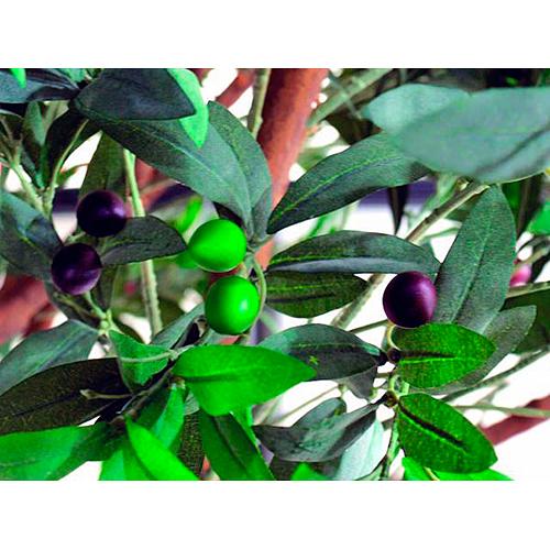 EUROPALMS 250cm Jättimäinen Olivipuu (öljypuu) oliiveilla, erittäin majesteetillinen ja näyttävä aidolla rungolla, välimeren tunnelmaa. Oliivi on hyvin vanha viljelyskasvi. Kreetalla sitä tiedetään viljellyn jo noin vuonna 3000 eaa. Sitä milloin oliiveja on ensimmäisen kerran viljelty, niin ei tiedetä. Hedelmä, oliivi eli öljymarja, on pieni, 1–2,5 cm pitkä öljypitoinen luumarja.