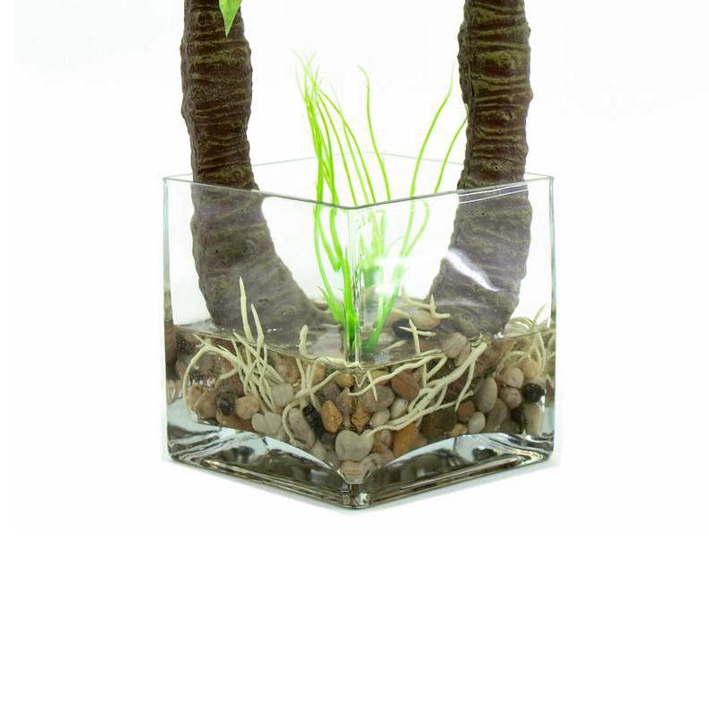 EUROPALMS 50cm Vehka deco-lasimaljassa. Sisustuksessa yleisesti käytetty köynnöstävä huonekasvi kasvaa luontaisena Kaakkois-Aasian ja Uuden-Guinean trooppisissa metsissä.