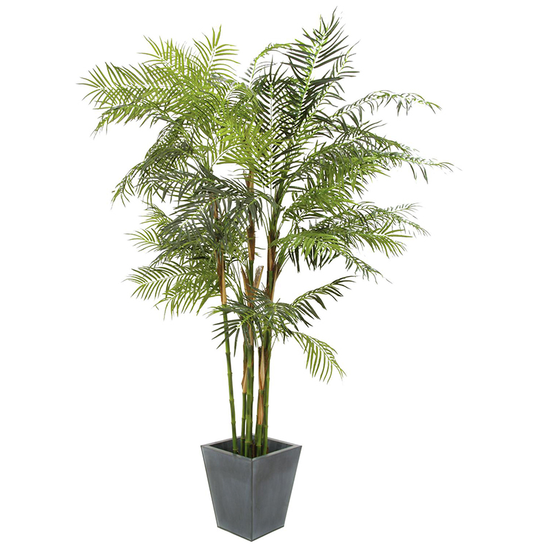 EUROPALMS 280cm Cycus-putkipalmu. Cycus tube palm, voluminous palm for the highest expectations