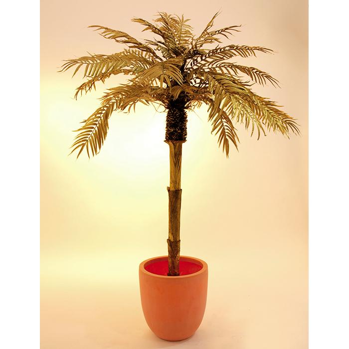 EUROPALMS LOPPU!!180cm Kultainen Palmu. On aivan ehdoton katseenvangitsija.