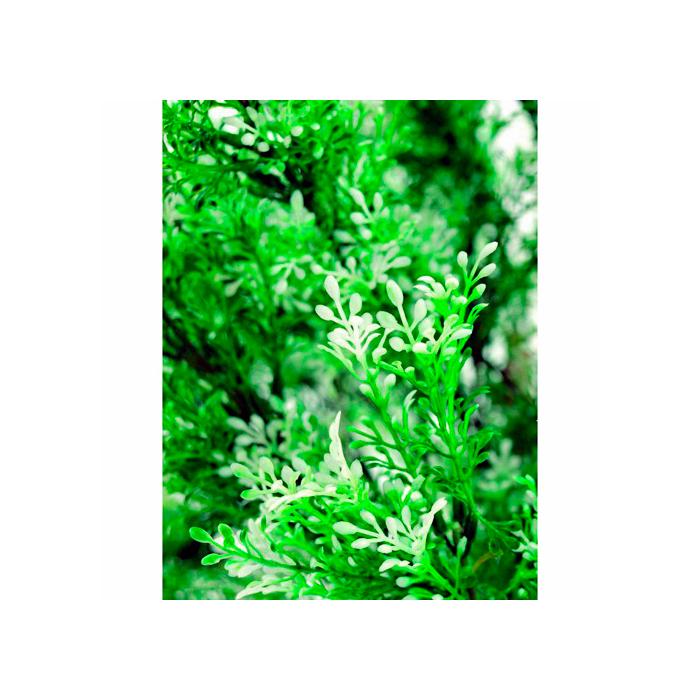 POISTO EUROPALMS 175cm Sääskiruoho, runko liaanipuuta, luonnollisesti muotoiltu.