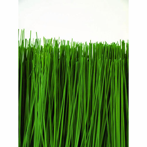 EUROPALMS 50 x 30cm Dyyniruoho puuruukussa. Dune grass. For slender decorative demands