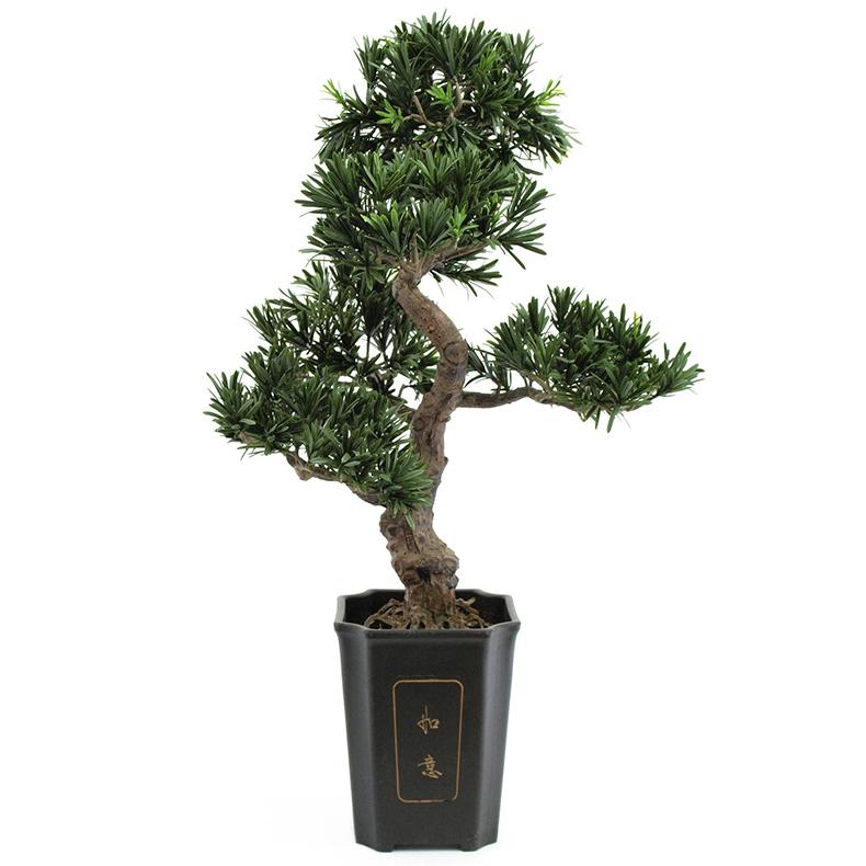 EUROPALMS 80cm Bonsai-Podocarpus deco-ru, discoland.fi