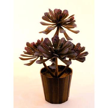 EUROPALMS 30cm Mehikasvi deco-ruukussa, oliivinvihreä, muovisekoitetta. Aeonium plant, olive-green. Succulent Aeonium plant pefrect as table decorations