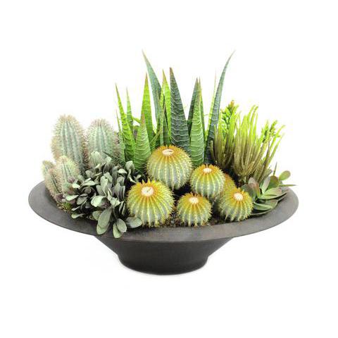 EUROPALMS 38cm Mehevä sekoitus autiomaan kasveja deco-ruukussa, muovisekoitetta.