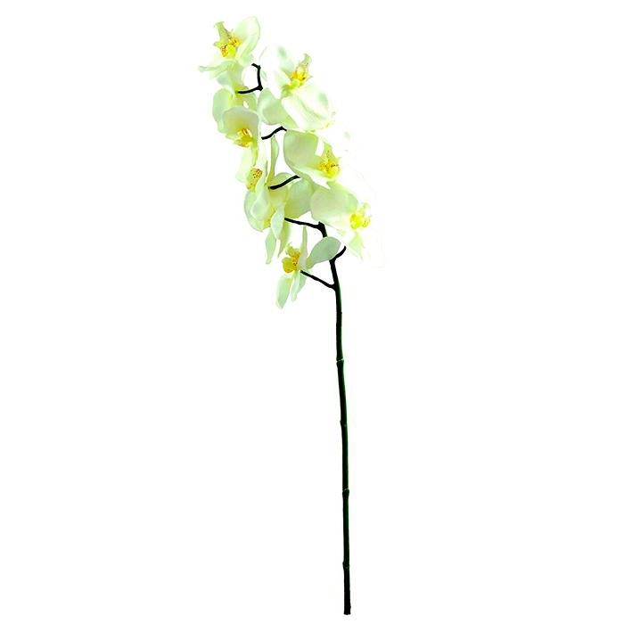EUROPALMS 70cm Orkidea, väri kerma. Nyk, discoland.fi