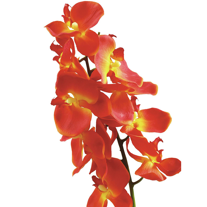 EUROPALMS 70cm Orkidea, väri oranssi, aitojen nykyisten orkideoiden esi-isät olivat olemassa maapallolla jo noin 80 miljoonaa vuotta sitten.