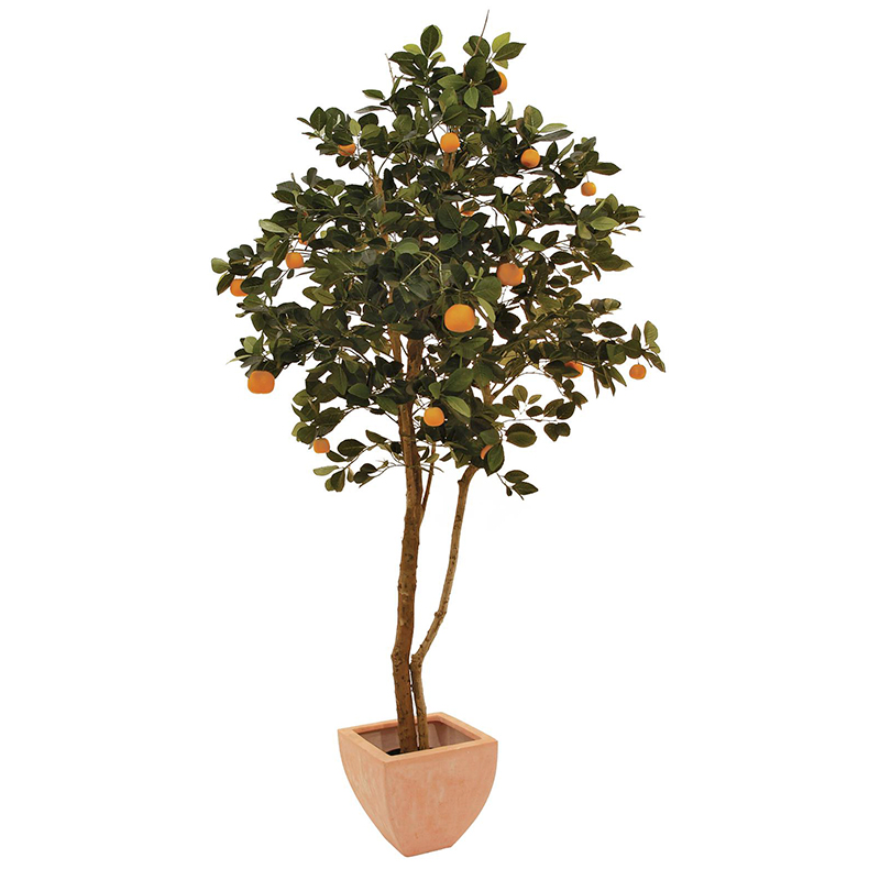 EUROPALMS 150cm Mandariinipuu hedelmillä. Mandarine Tree with fruits. Tangerines tree in a modern spherical shape