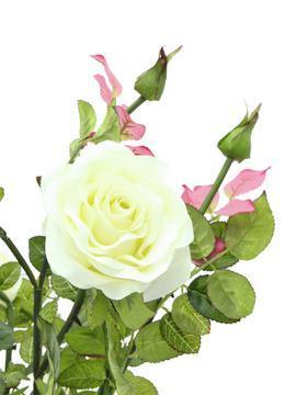 EUROPALMS 86cm Ruusupensas kukkien väri kerma