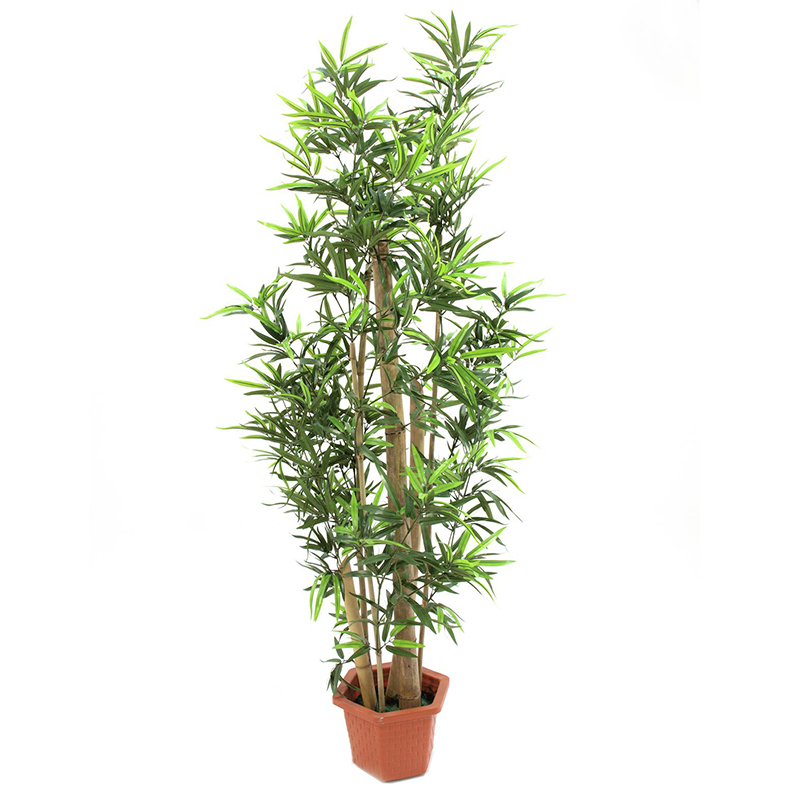 EUROPALMS 205cm Bambupuu aidoilla rungoi, discoland.fi