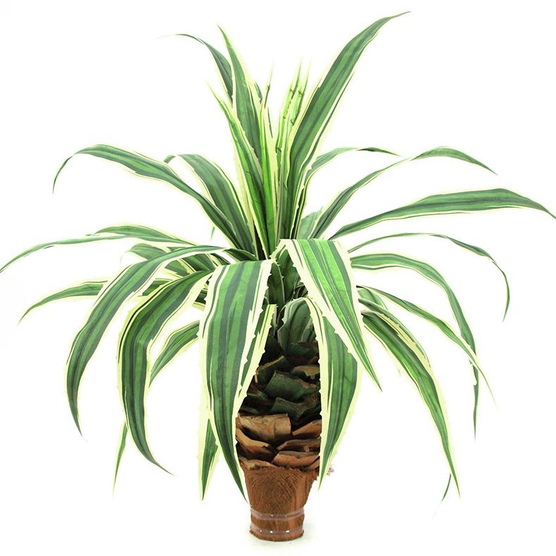 EUROPALMS 75cm Ananaspensaan taimi sahal, discoland.fi