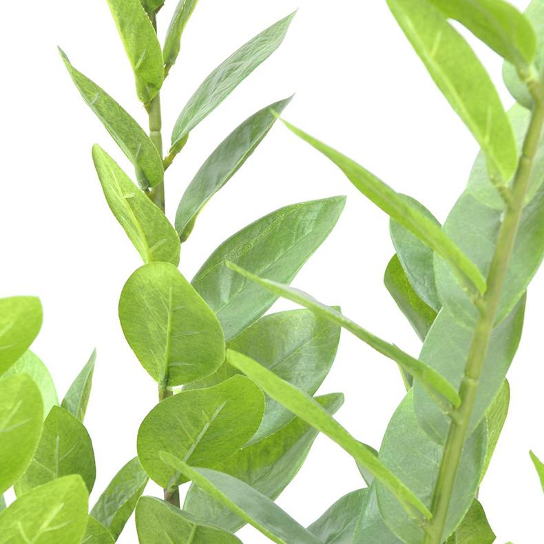 EUROPALMS 70cm Palmuvehka tunnetaan myös nimillä tikapuukukka, leidipalmu, palmusaniainen ja zamia. Kasvi on kotoisin Afrikasta Tanzaniasta ja kuuluu myös jokaiseen autiomaa-decoon.