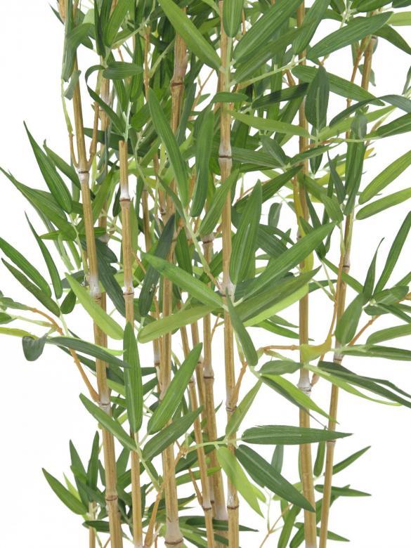 EUROPALMS 150cm Bamburuokoa vaaleaa deco-kulhossa, aidot bambut on heinäkasvien ryhmä, johon kuuluu noin 90 sukua ja näihin yhteensä yli tuhat lajia, yksittäinen bambu versoo suoraan maasta vuosittain useita versoja, ja niiden halkaisija riippuu emokasvin iästä, pituutta tulee päivittäin lisää. Bambut, kuten muutkin heinäkasvit, kasvavat maan rajasta eikä kärjestään. Bambuja kasvaa villinä laajalla alueella ja viljeltynä lähes kaikkialla. Laajimmat bambumetsät ovat Aasian vuoristoissa, joissa bambuja kasvaa jopa 4 000 metrin korkeudessa. Bambun varsi on erittäin kuitupitoinen, ja sitä käytetään rakennusmateriaalina, polttopuuna, työkalujen ja tarveastioiden valmistukseen sekä tekstiilien raaka-aineena. Nuoria versoja syödään keitettyinä. Isopandat ja kultapandat käyttävät bambuja pääravintonaan