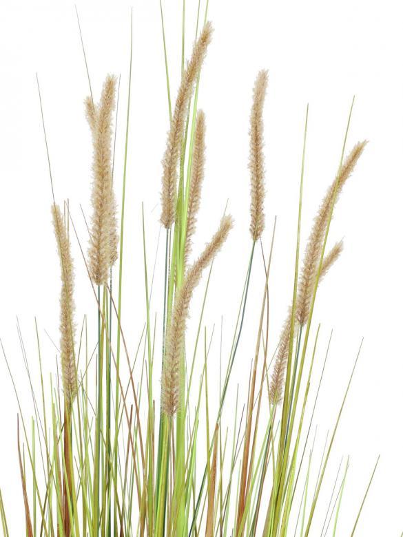 EUROPALMS 120cm Koristeruoho Fountain grass bush. Bundle of fountain grass in autumnal colors.