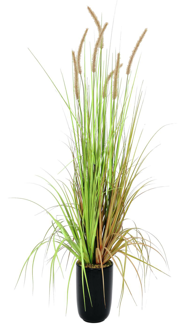 EUROPALMS 120cm Koristeruoho Fountain grass deco-ruukussa. Bundle of fountain grass in autumnal colors.