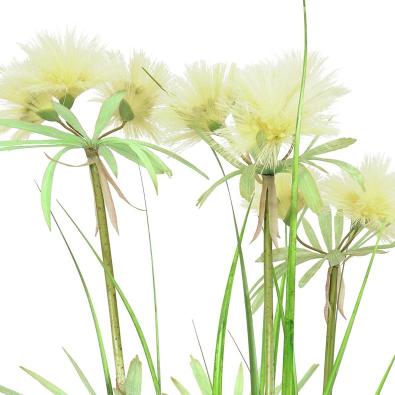 EUROPALMS 120cm Tähtikoristeruoho deco-ruukussa, viilisti kasvanut, väri tuore vihreä