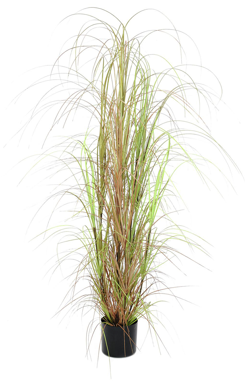 EUROPALMS 150cm Koristeruoho deco-ruukussa. Grass bush. Autumnal accents for your home.