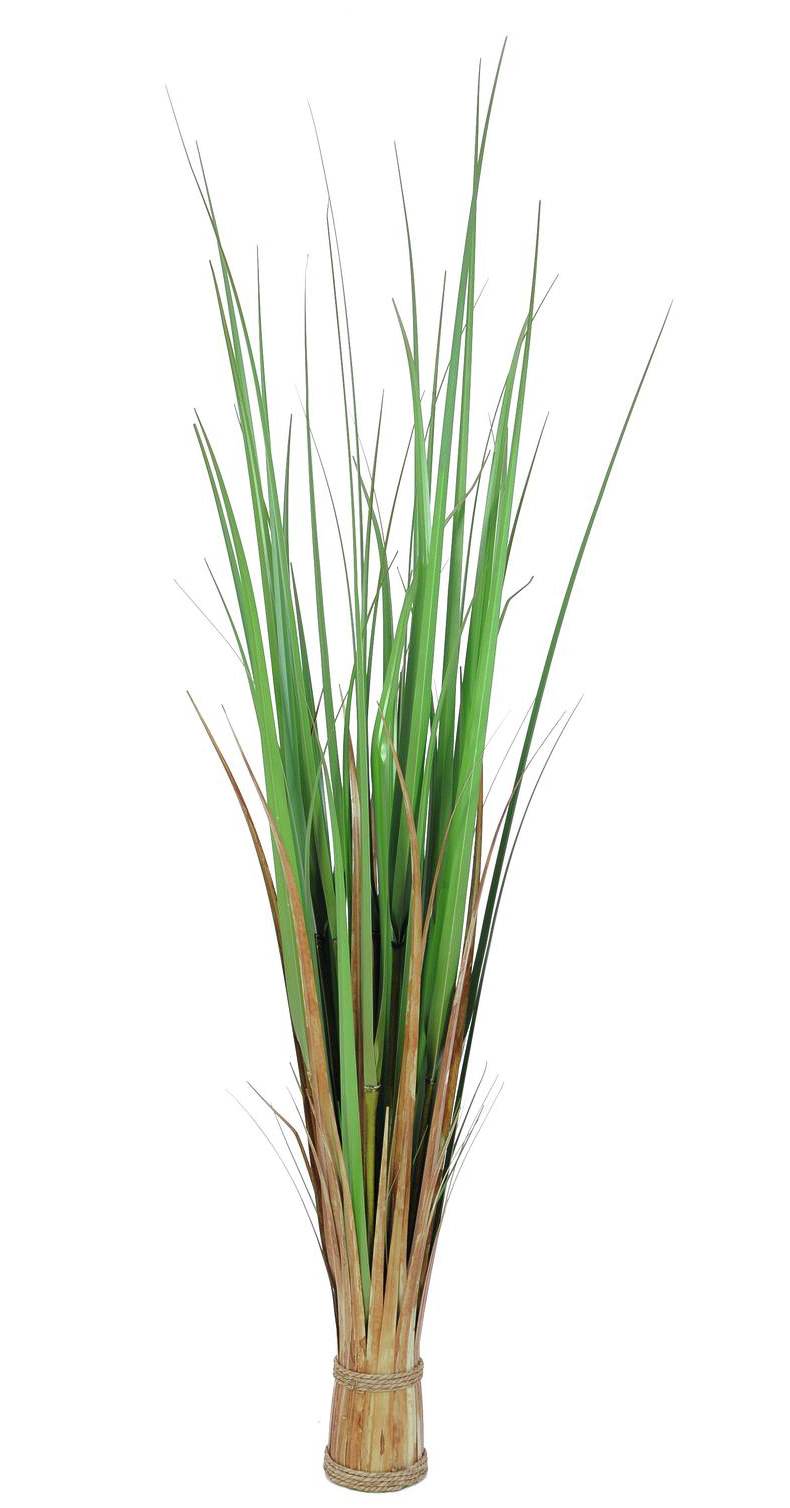 EUROPALMS 120cm Koristeruoho Fox grass. Space saving bundle of grass - easy to move.