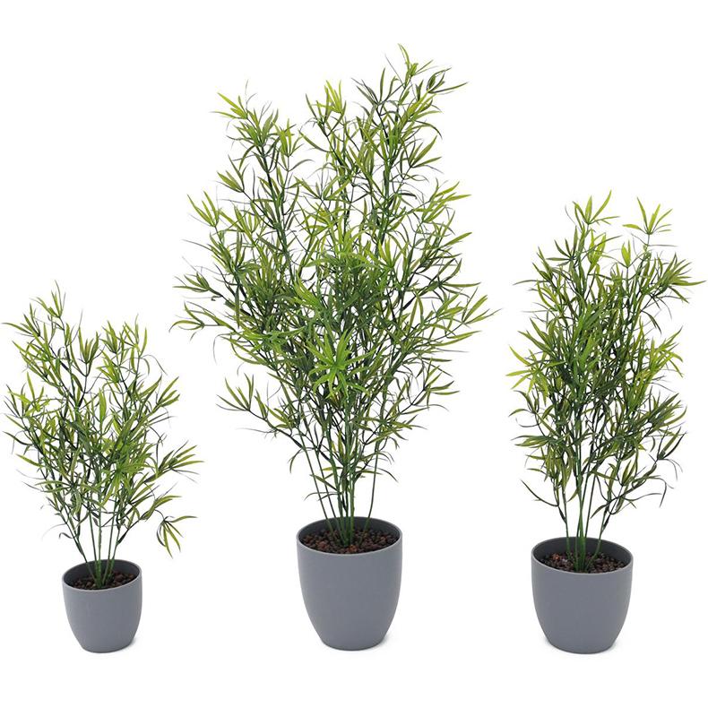 EUROPALMS 40cm Parsa, hyvin aidon oloinen. Asparagus in natural shape.