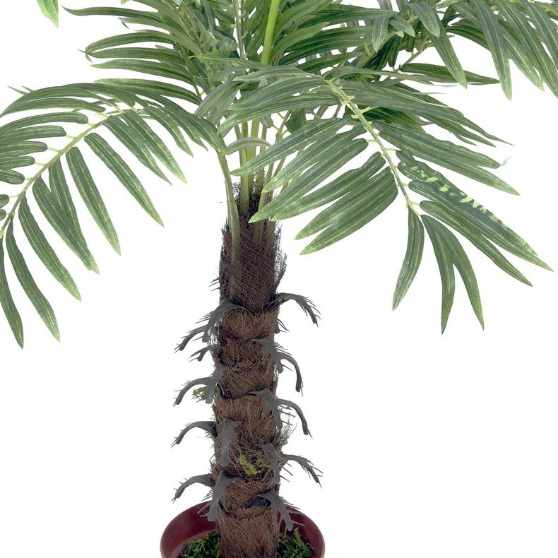 EUROPALMS 90cm Kookospalmu, keinotekoinen runko kääritty kookosparkkikuidulla, 12 lehvää, puutarhurin ruukulla. Kookospalmu tunnetaan hedelmästään kookospähkinästä, se kasvaa jopa 40 metrin pituiseksi. Kookospalmun runko on haaraton, ja lehdet lähtevät tähtimäisesti yhdestä pisteestä. Palmu on kotoisin Kaakkois-Aasian rannikoilta Malesia, Indonesia, Filippiinit ja Melanesia. Uskotaan että sen luonnonmuodot ovat levinneet merivirtojen mukana jo esihistoriallisena aikana. Nykyisin sitä viljellään laajasti tropiikissa ja subtropiikissa. Kookospalmu on mielenkiintoinen ja tavallisuudesta poikkeava katseenvangitsija joko yksittäiskasvina tai ryhmänä.